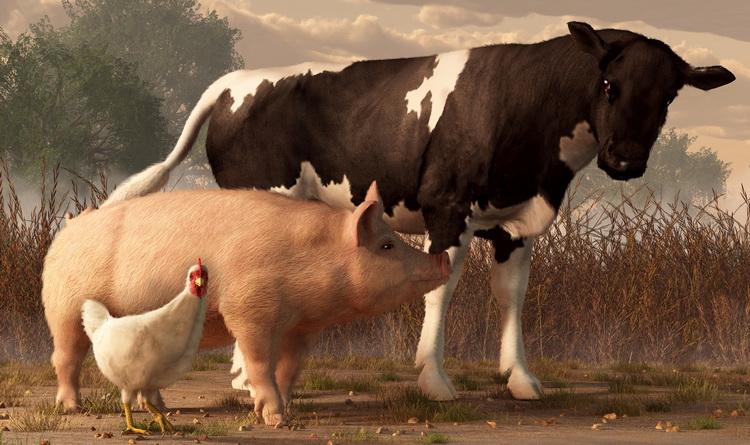 Fleisch Proteine