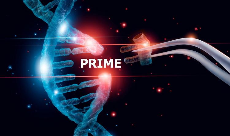 Genomeditierung